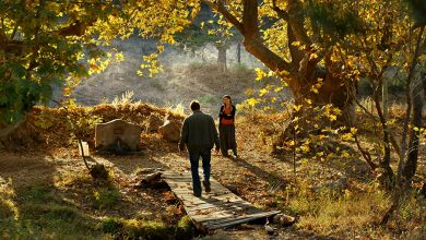 تصویر از نقد درخت گلابیِ وحشی جیلانِ دانا و سینان منفعل